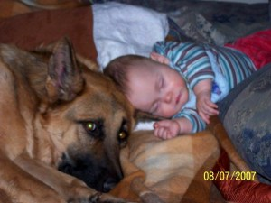 german-shepherd-with-sleeping-baby