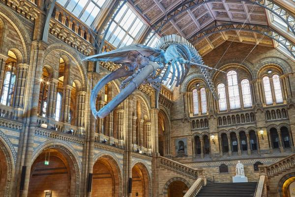 Icon Natural History Museum Dippy Replaced