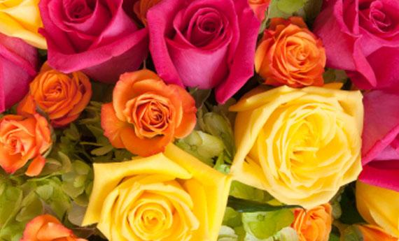 Linguaggio dei fiori i significati dei colori delle rose