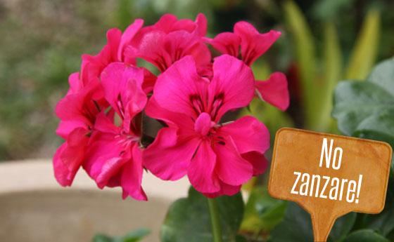 Piante anti zanzare quali coltivare ora nel balcone e nel giardino  LEITV