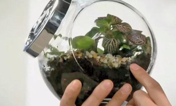 Giardino in bottiglia fai da te come creare un giardino