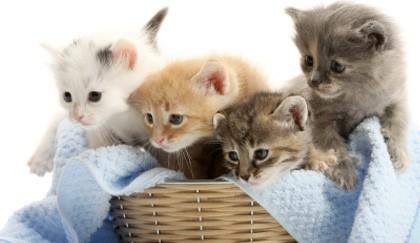 Cani e gatti perdono il pelo 3 modi di evitare di esserne