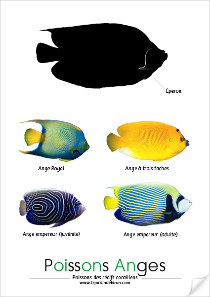 Poissons Anges