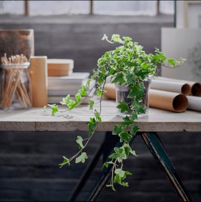 ikea les plantes d interieur a
