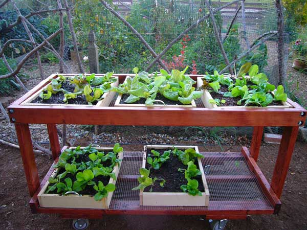 Vegetable Growing Box How Build