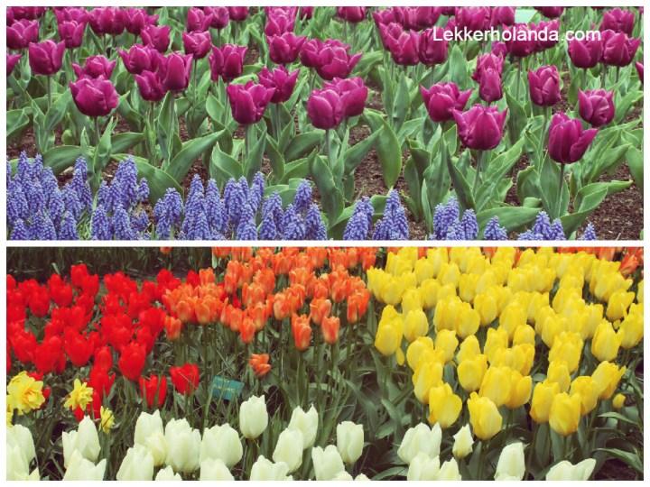 Keukenhof tiempo de tulipanes