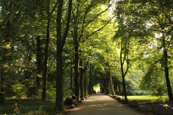 Ameliesweerd: un bosque encantado al lado de Utrecht