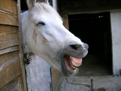 cheval qui rit