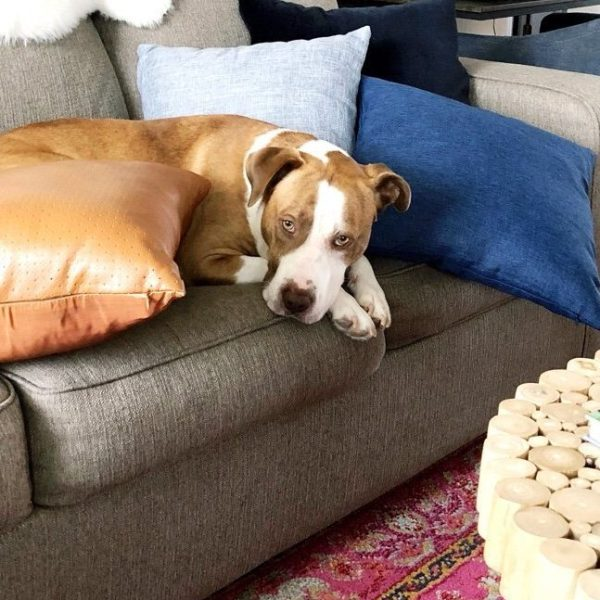 making a home more pet-friendly