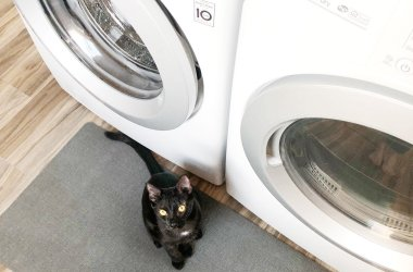laundry room cat room combo