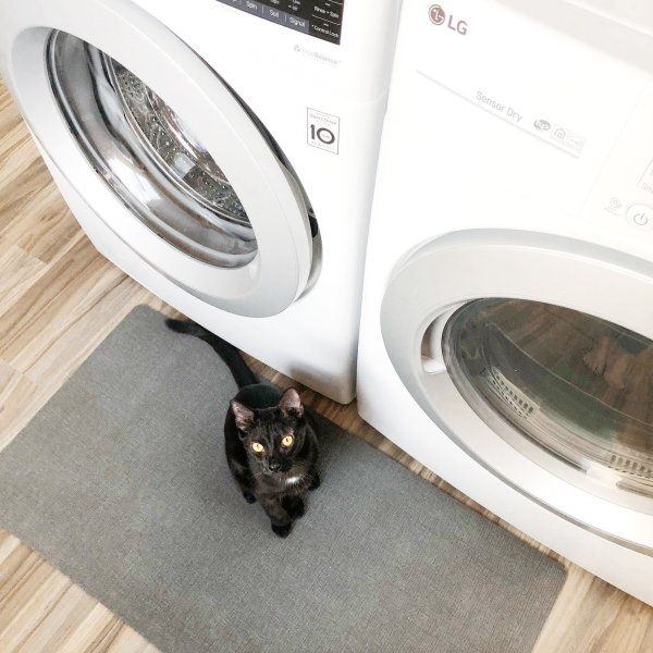laundry room cat room combo