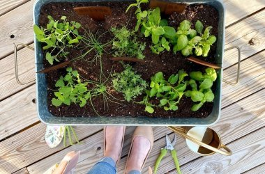 diy container herb garden for patio on a budget