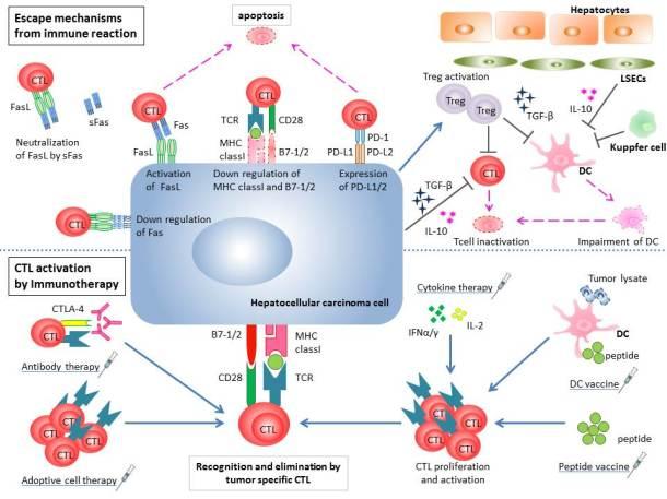 immuno_PDL1_cancers