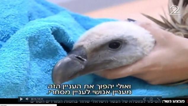 Délicatesse : le chef des rebelles syriens rend un aigle perdu à israël