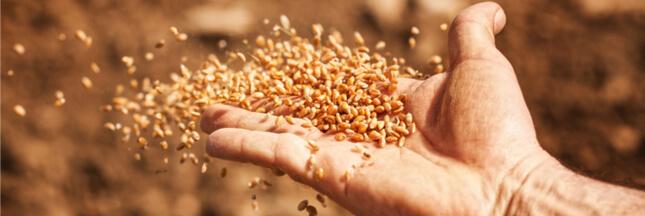 Le Conseil constitutionnel interdit la vente de semences paysannes