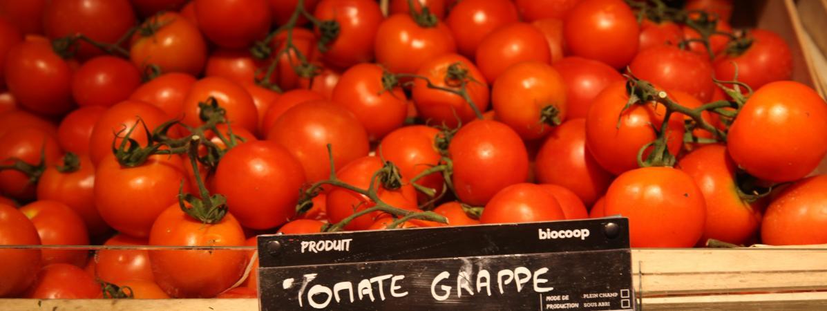 « Cash investigation » sur la privatisation du marché des semences