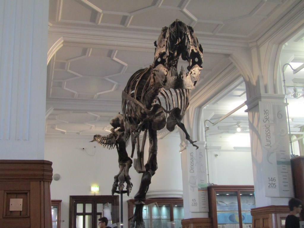 Exploring Manchester Museum