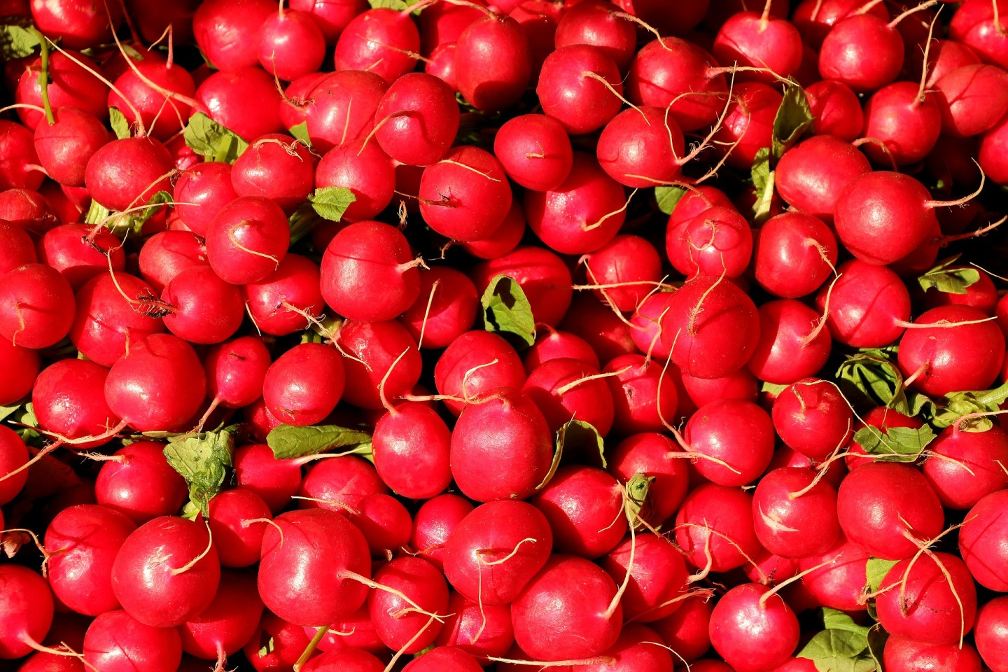 My favourite of all weight loss-friendly foods - radishes