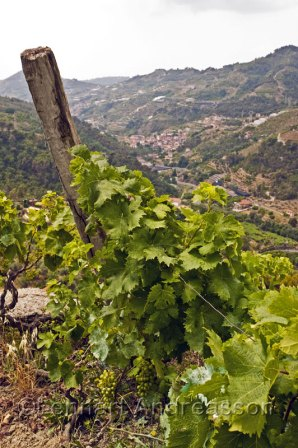 View of the wineyard and the village Soldano