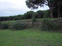 : Pianabella: Muro romano a Procoio