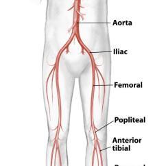 Vascular Anatomy Diagram Lower 2004 Honda Vtx 1300 C Wiring Lemaitre