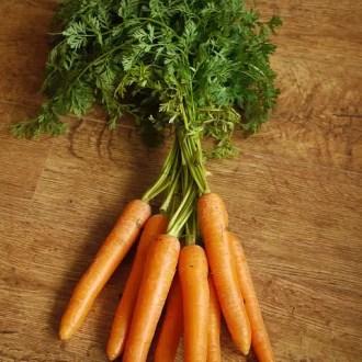 carotte fane
