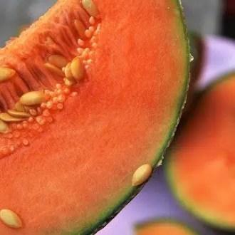 melon jaune charentais