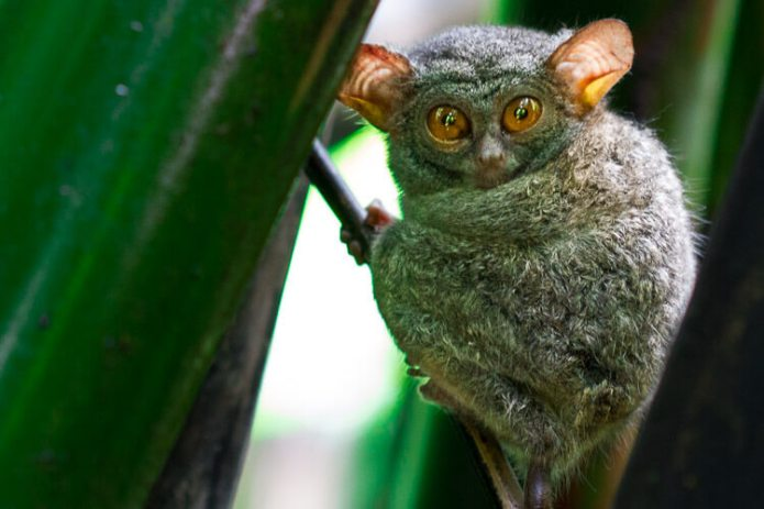 Nature Culture In North Sulawesi Tours Of Tangkoko And The Highlands