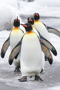camminata a pinguino