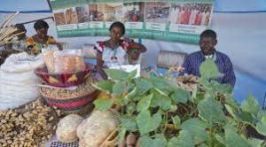 non reconnaissance des semences paysannes