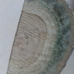 blue stain pada kayu jati