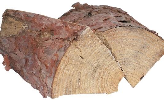 kekurangan kayu pinus