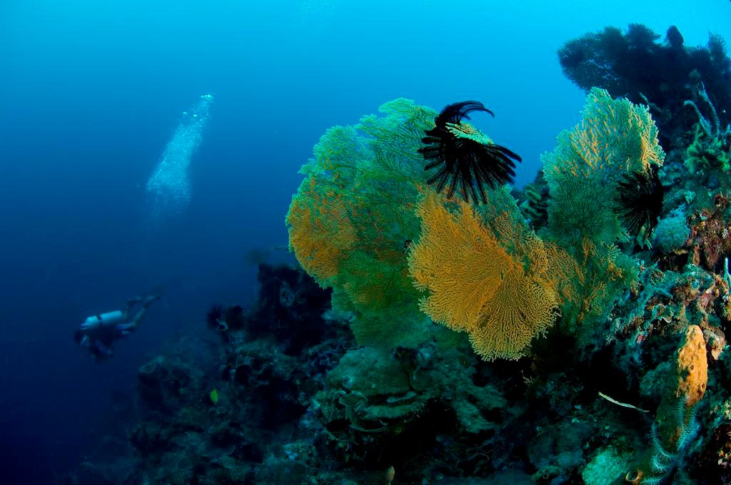 Lemlunay Diving