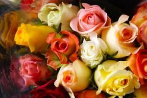 Spar roses