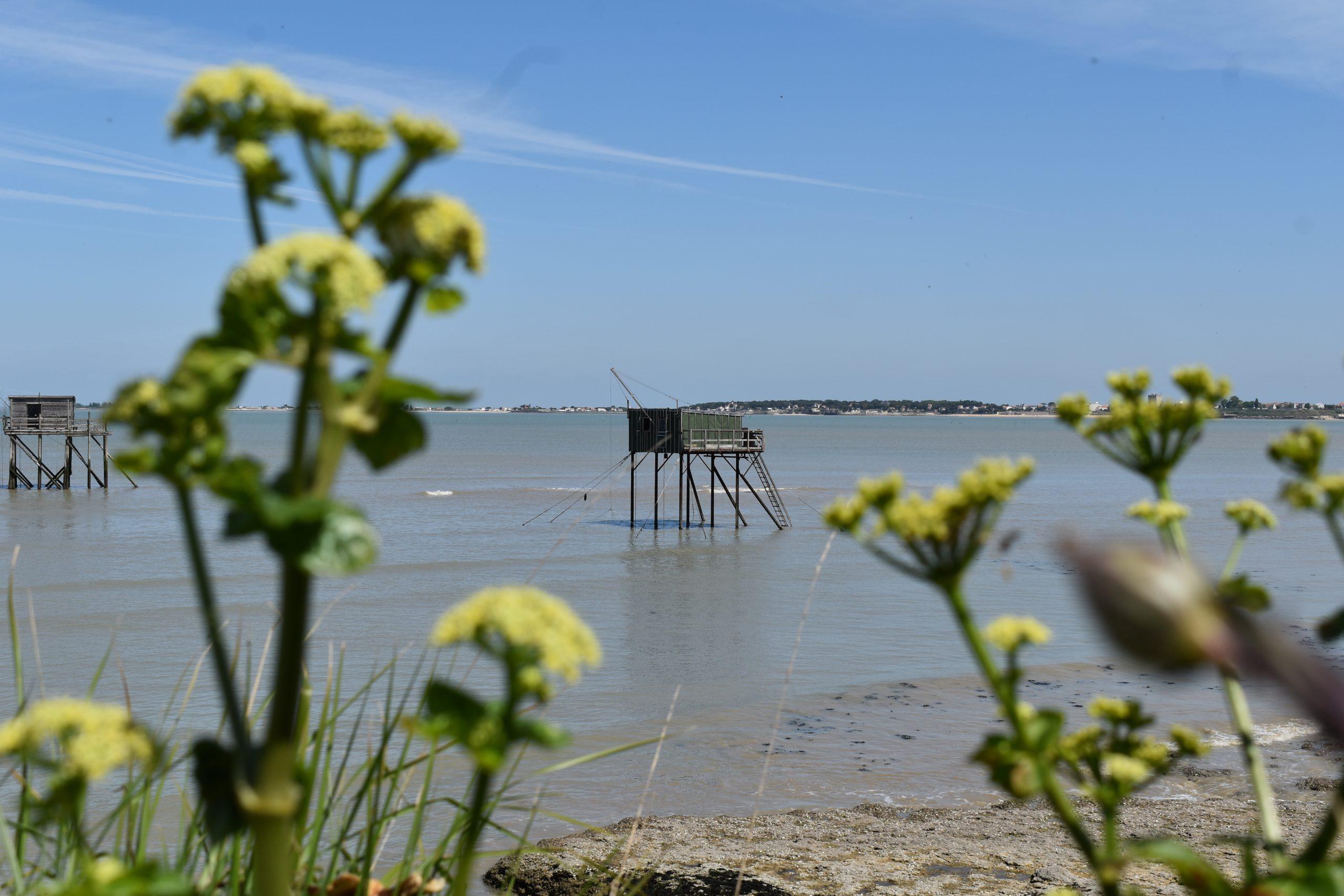 L'île Madame, l'île secrète en Charente-Maritime