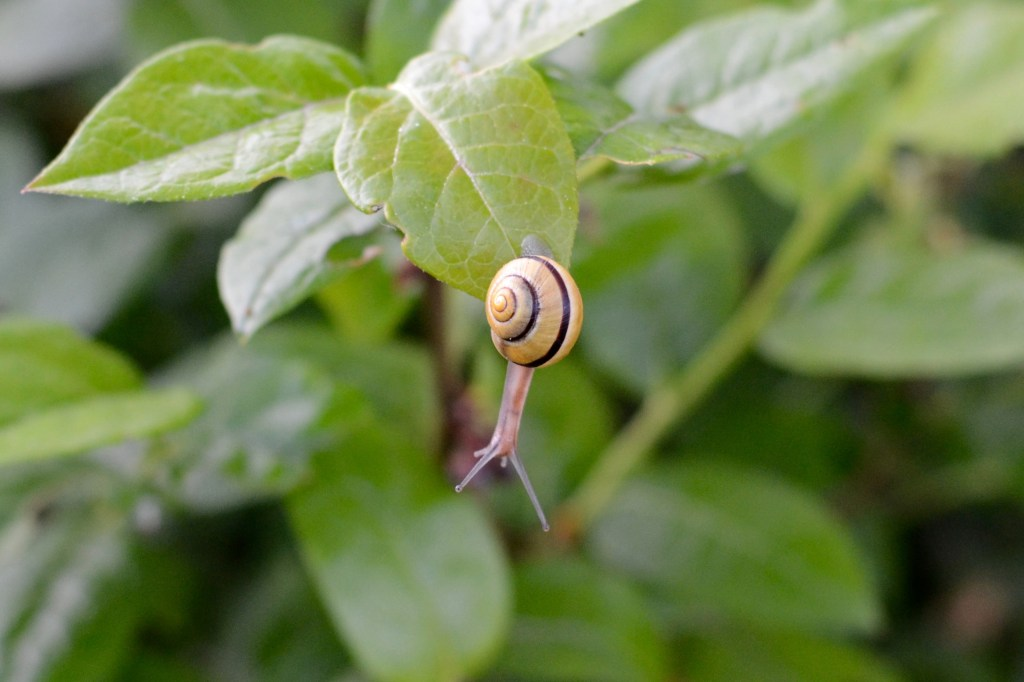 Snail on a Blueberry