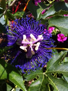 R.Thomas Flower1