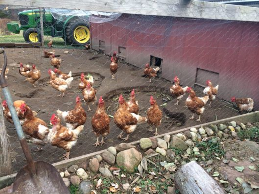 And the chickens