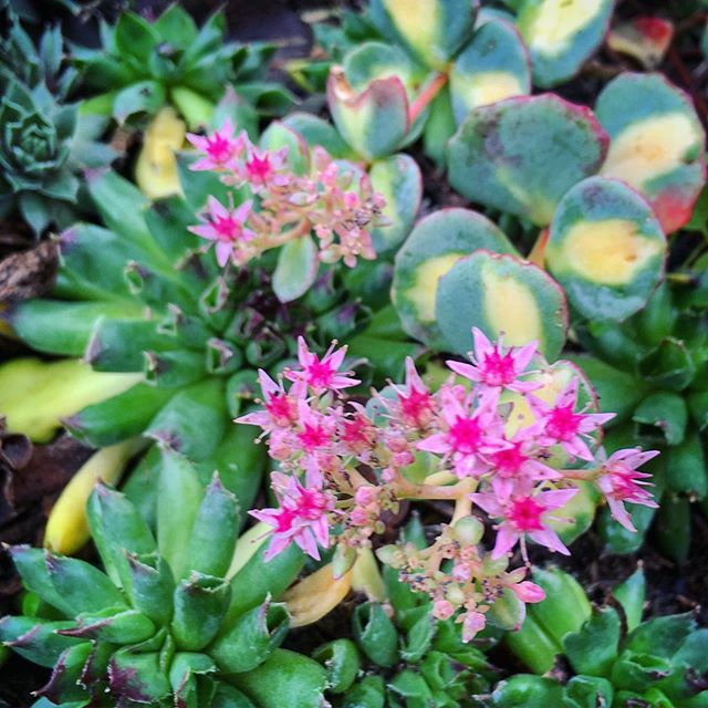 #octoberblooms #succulents