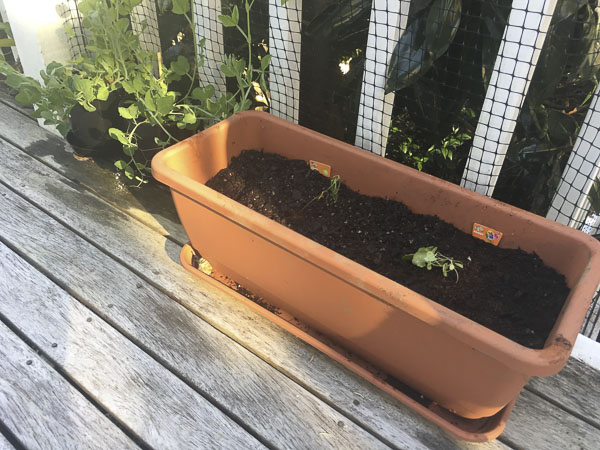 Lena Talks Gardening: meet my Little Garden