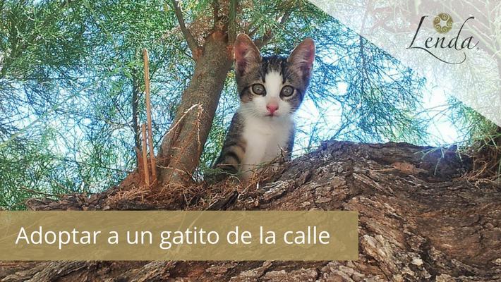 Adoptar a un gatito de la calle