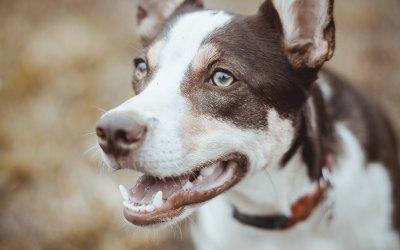 Problemas dentales del perro