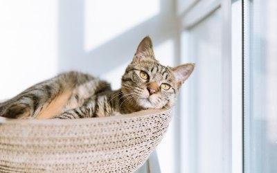 ¿Qué clase de gato es mejor para una casa con niños?