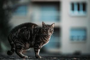 ¿Qué hago si mi gata está preñada?