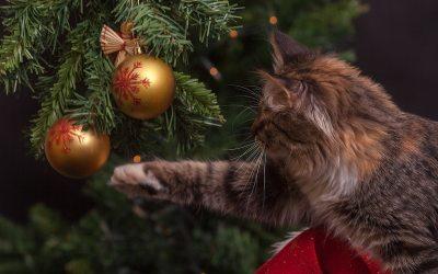 La Navidad y tu gato