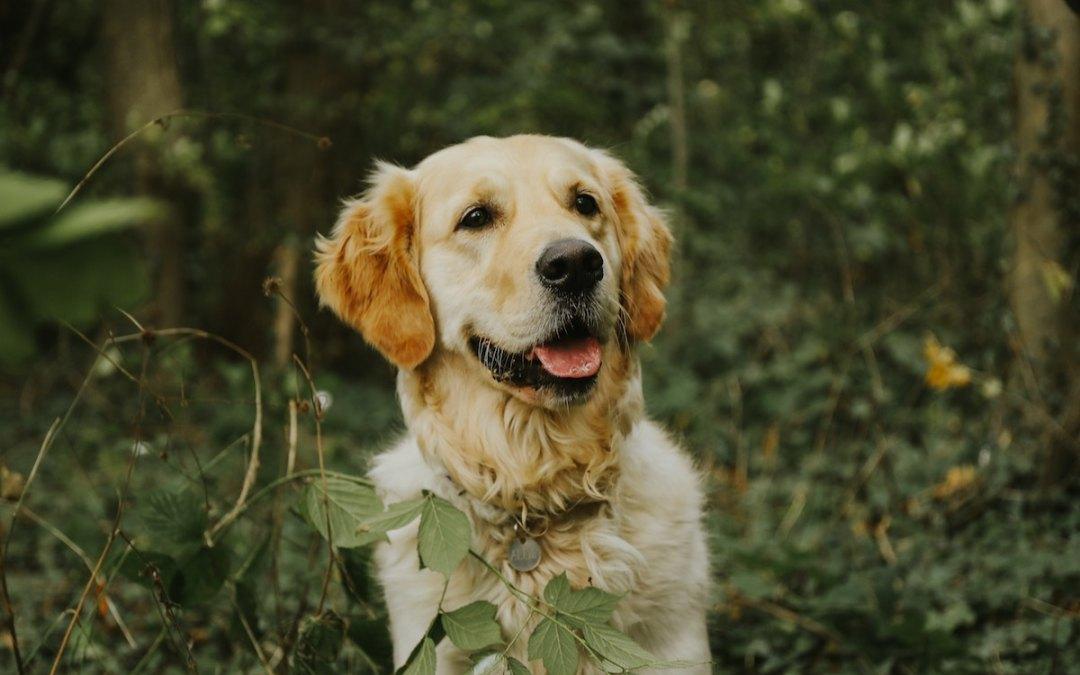 propósitos-año-nuevo-perro