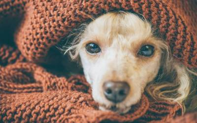¿Le puedo contagiar la gripe a mi perro?