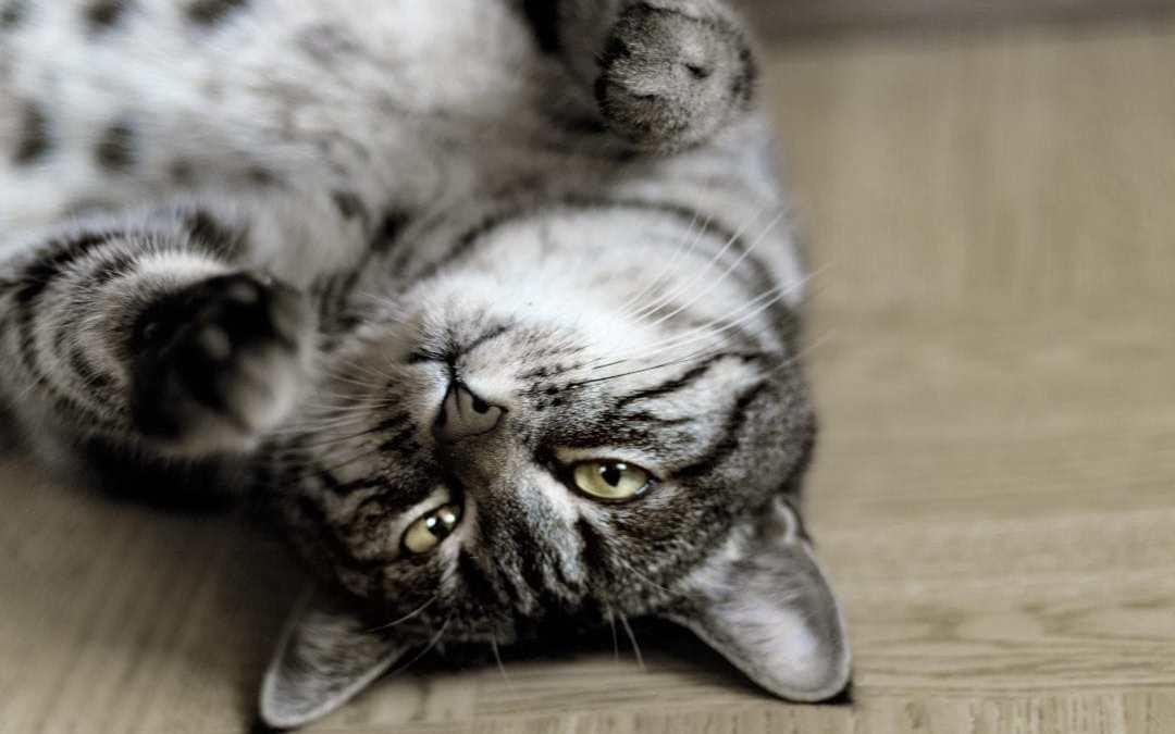 10 consejos para calmar gatos con ansiedad