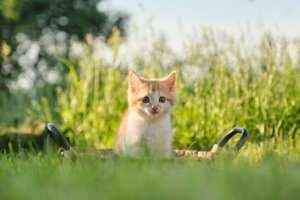 Cachorro gato Lenda