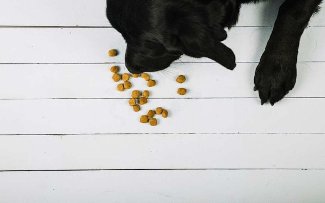 ¿Puedo darle cereales a mi perro? Lenda